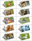 Wildlife Series 1 Gift Greeting Card Boxed Set